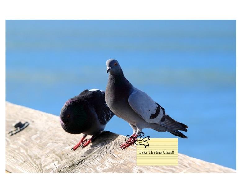Carrier Pigeon Big Class